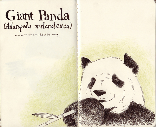 Jessica Blank SBP Giant Panda