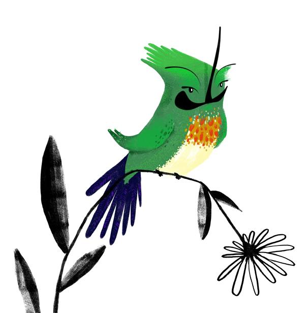 jessblank_hummingbird001