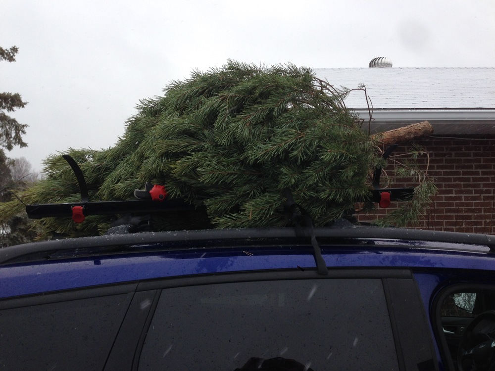 We made it home, and the tree never fell off of the roof!