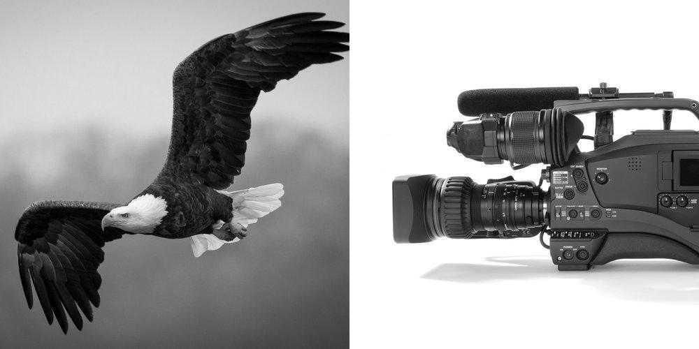 adelaar-logo-design-02