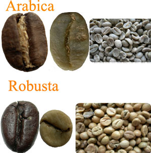 Arabica-vs-Robusta1.jpg