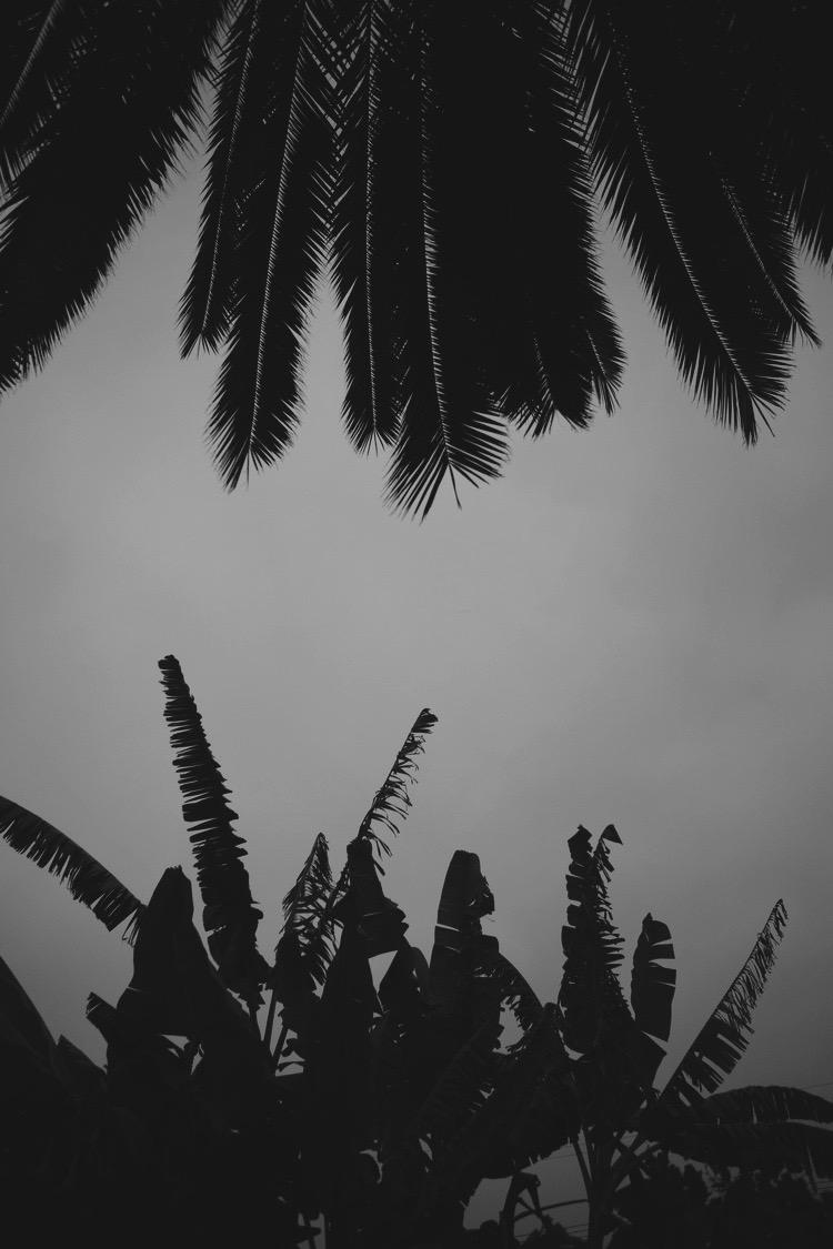 palmtopalm (1).jpg