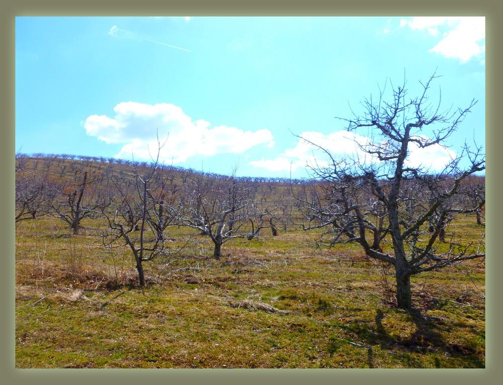 orchard2.jpg