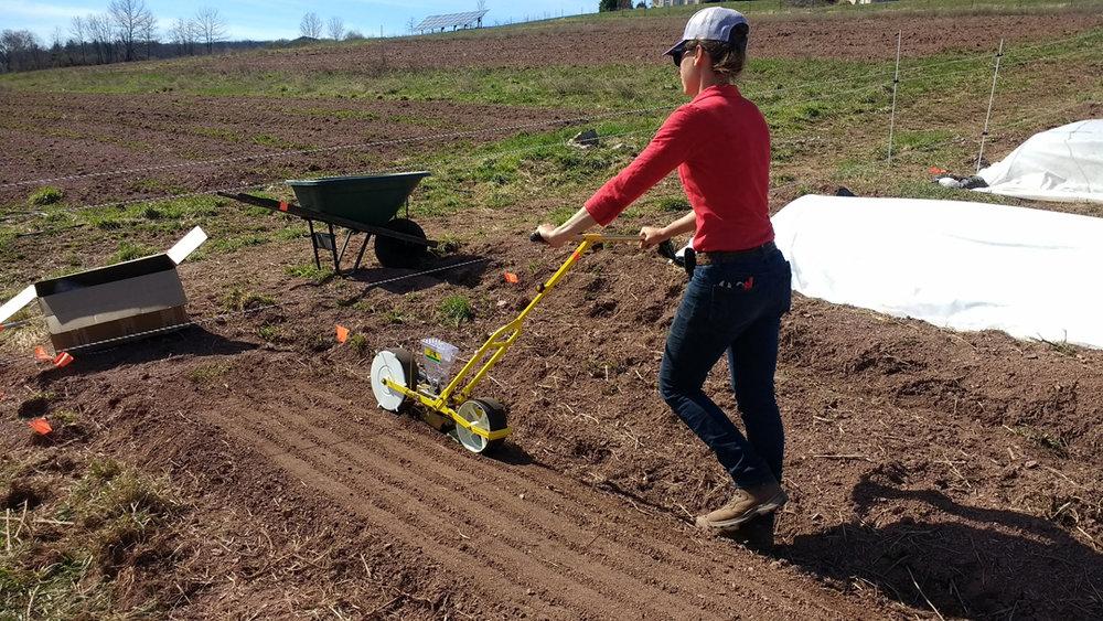 Field seeding!