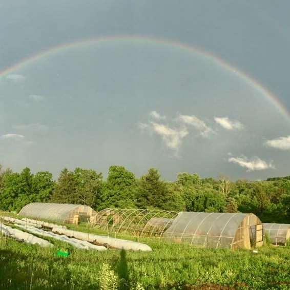 Rainbow over Aldebaran Farm