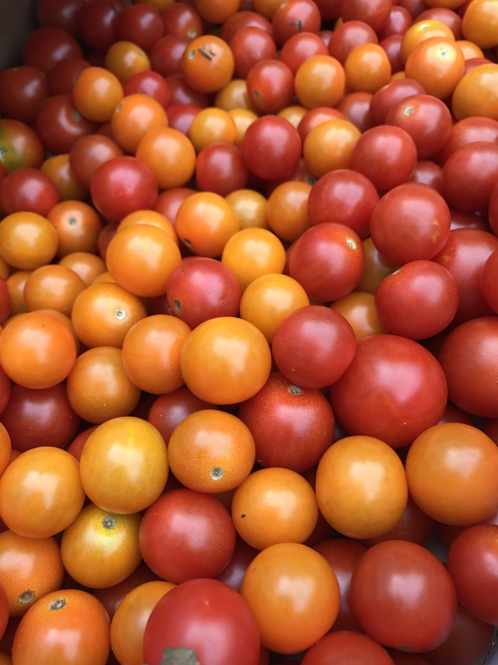 Buckets of cherry tomatoes!