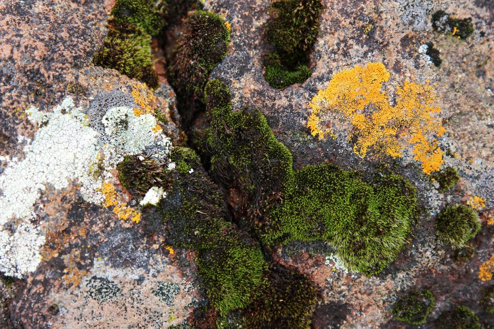 North shore moss and lichen.jpg
