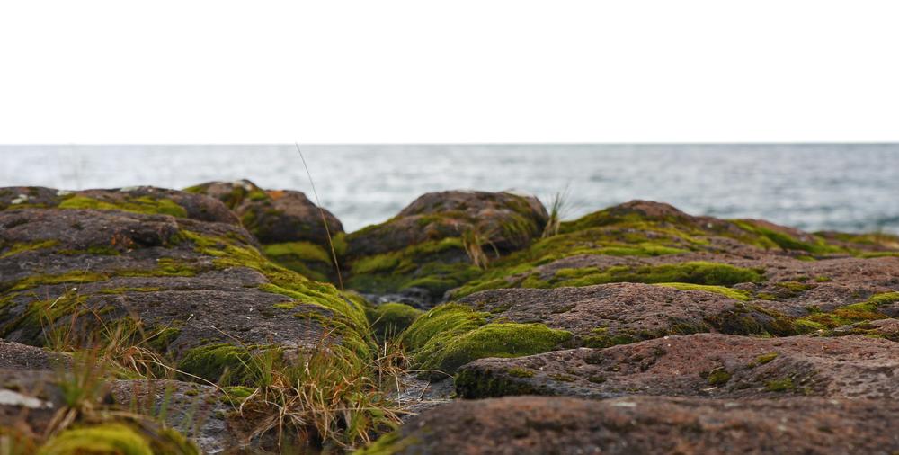 sea gull view.jpg