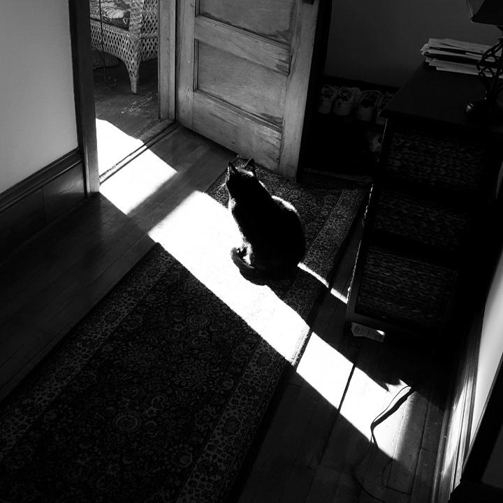 Bagheera contemplates the Ray.jpg