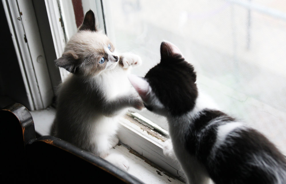 lily and rory kitten play2 the windup.jpg