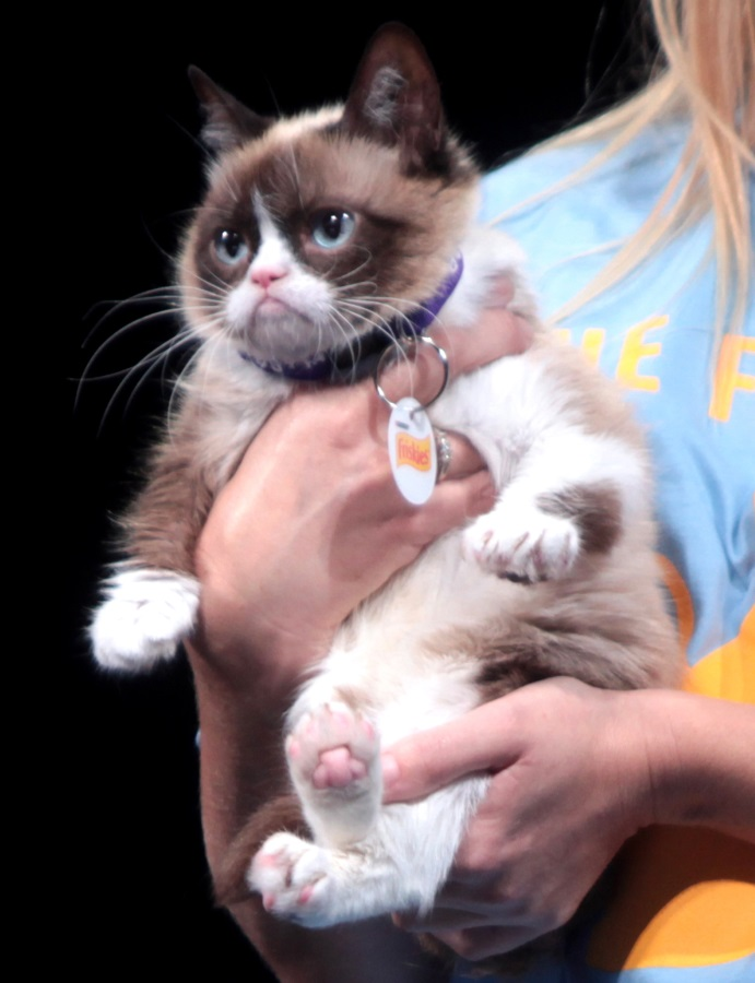 """Grumpy Cat by Gage Skidmore"" by Gage Skidmore. Licensed under CC BY-SA 3.0 via Wikimedia Commons - http://commons.wikimedia.org/wiki/File:Grumpy_Cat_by_Gage_Skidmore.jpg#mediaviewer/File:Grumpy_Cat_by_Gage_Skidmore.jpg"