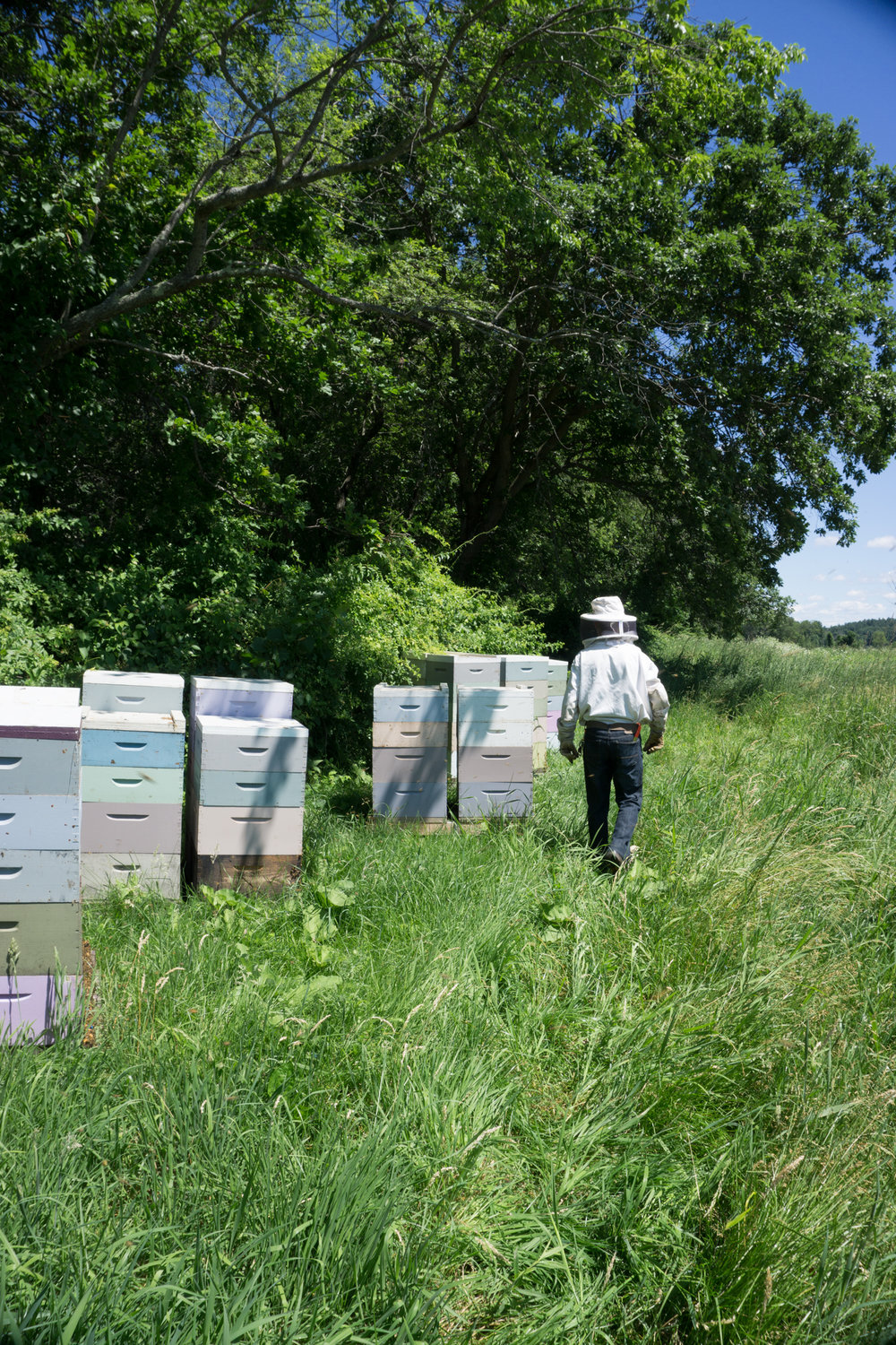 Checking the hives in Concord, MA