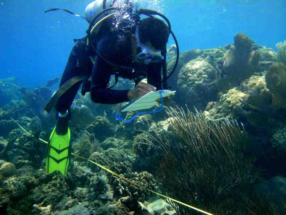 Community researcher monitors coral in Port Honduras Marine Reserve 2013.