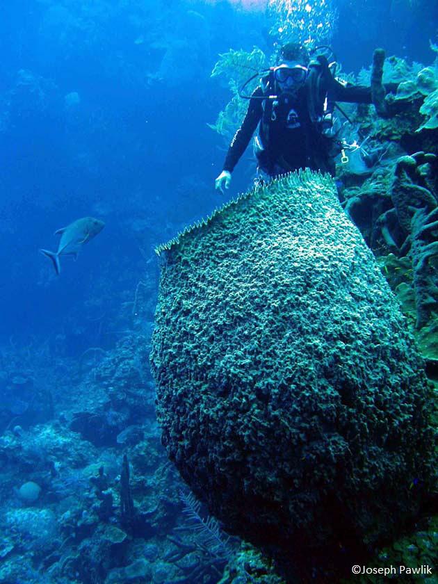 diver with sponge_Joseph Pawlik_CREDIT.jpg