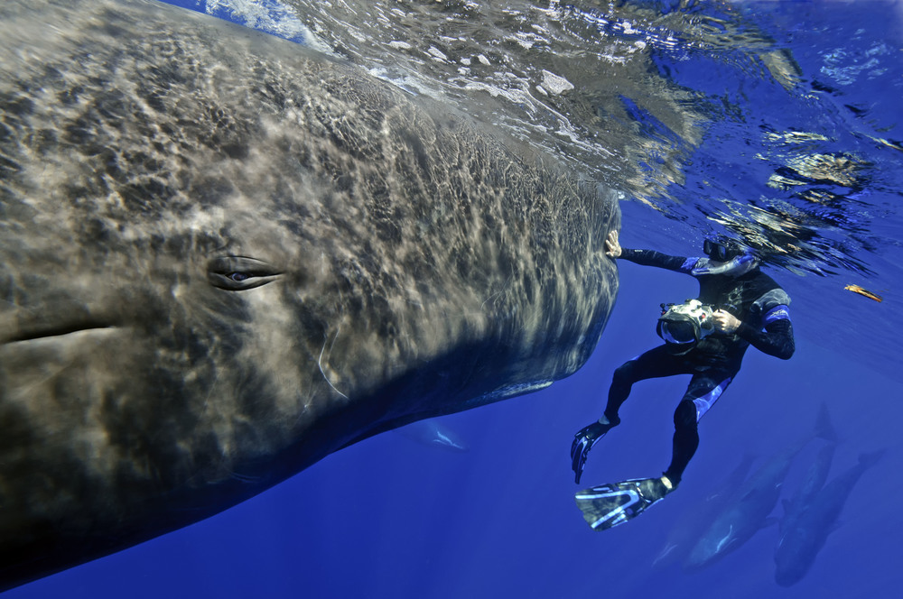 Sperm whales_Dominica_Peter G. Allinson MD-1.jpg