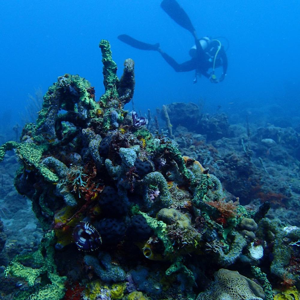 ACCRC_May2013_Grenada_036.jpg