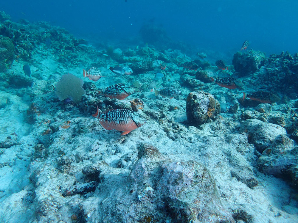 ACCRC_May2013_Belize_GloversReef_023.jpg