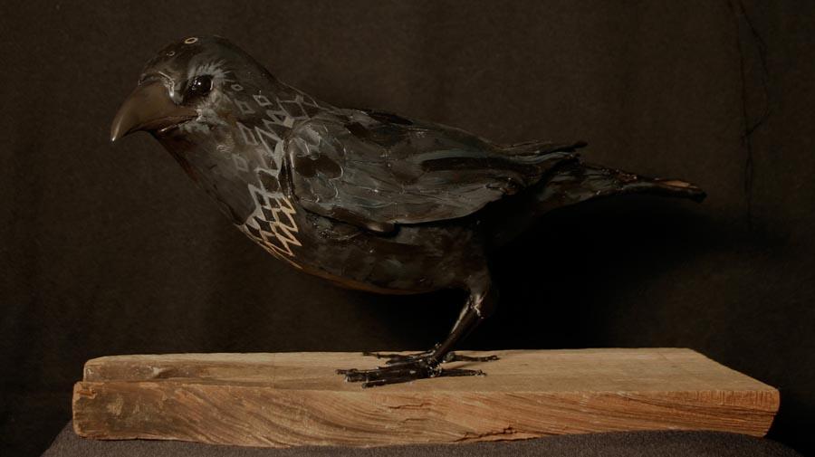 lone_crow.jpg
