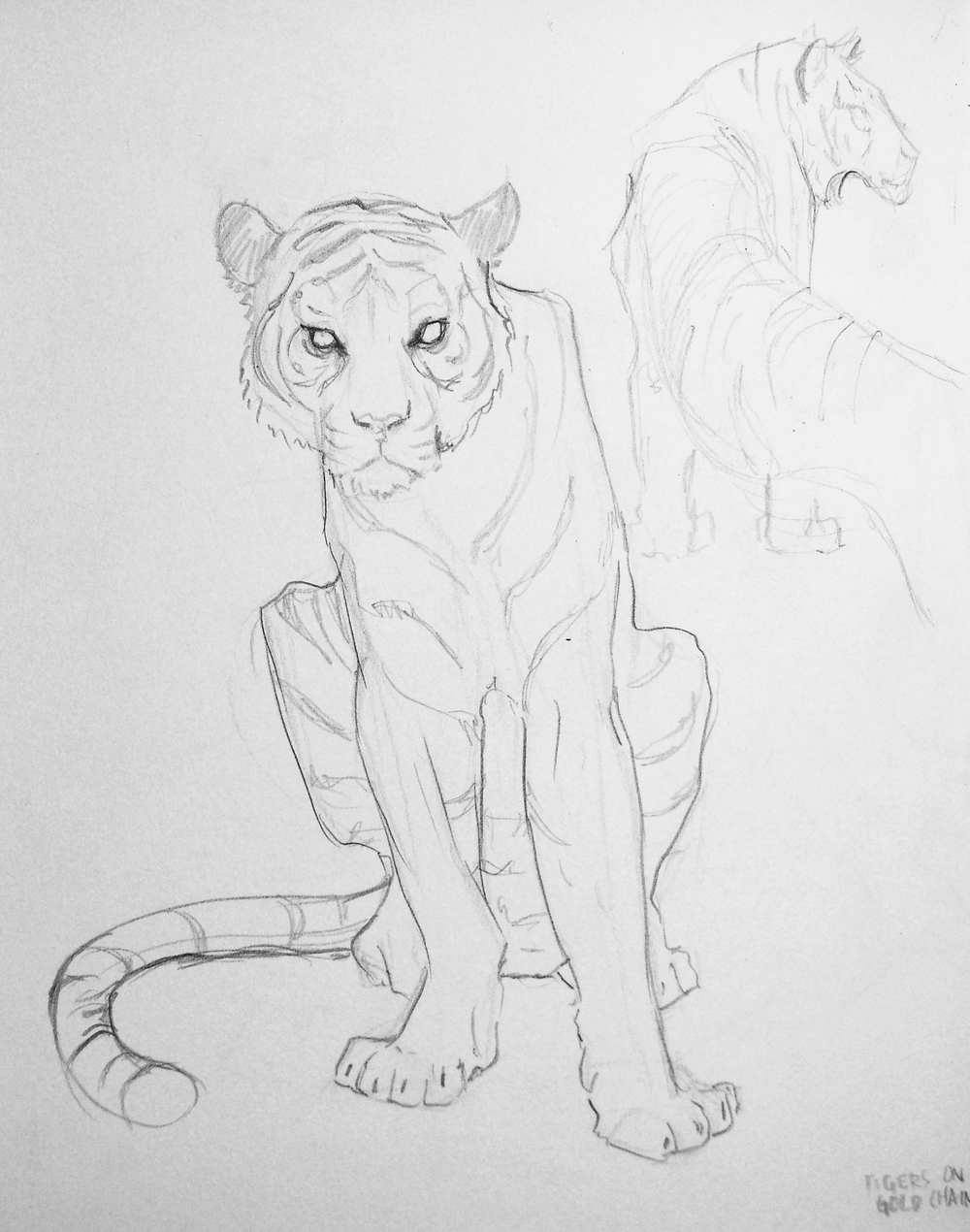 tigersketch.jpg