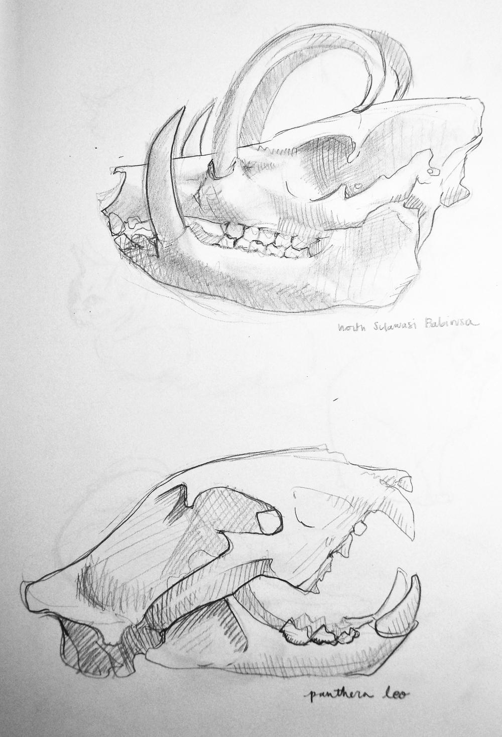 sketch14skulls.jpg
