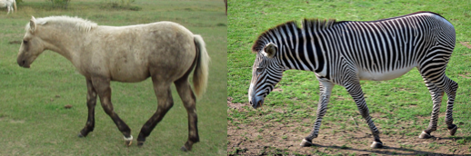 horses and zebras .png