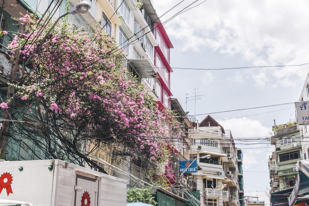 Bangkok (46).jpg