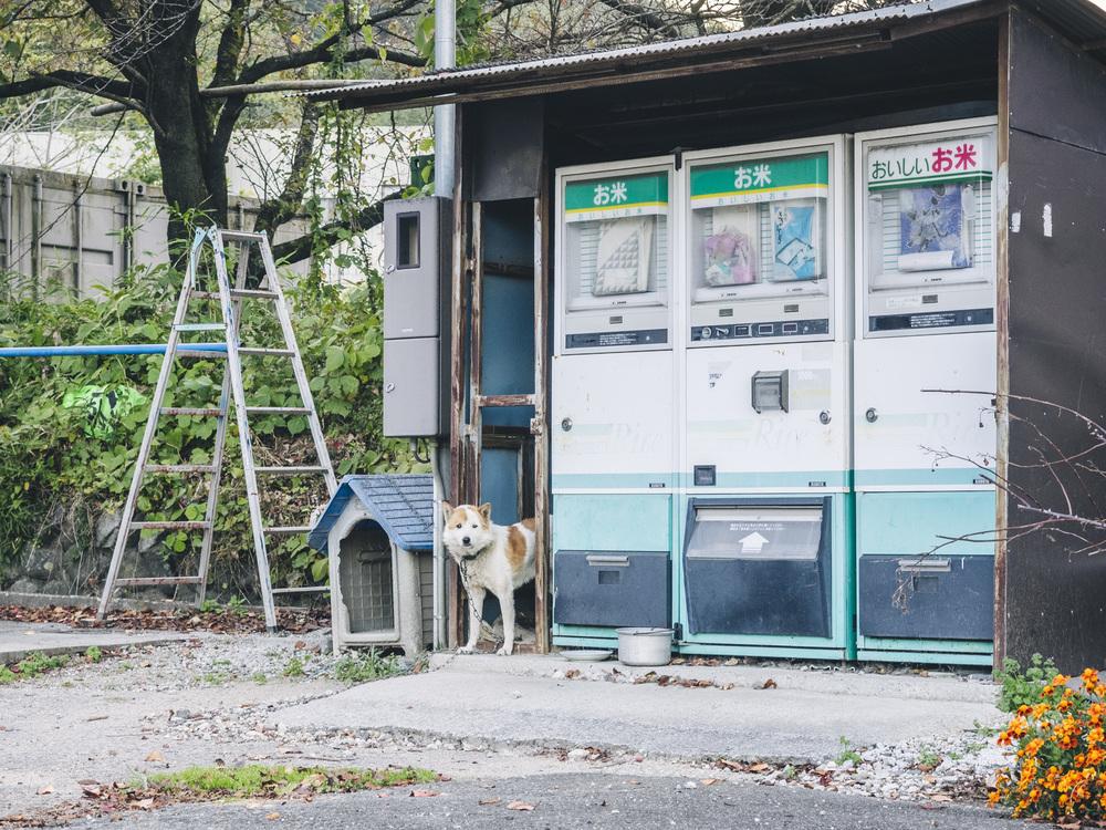 Japan2014_a180427.jpg