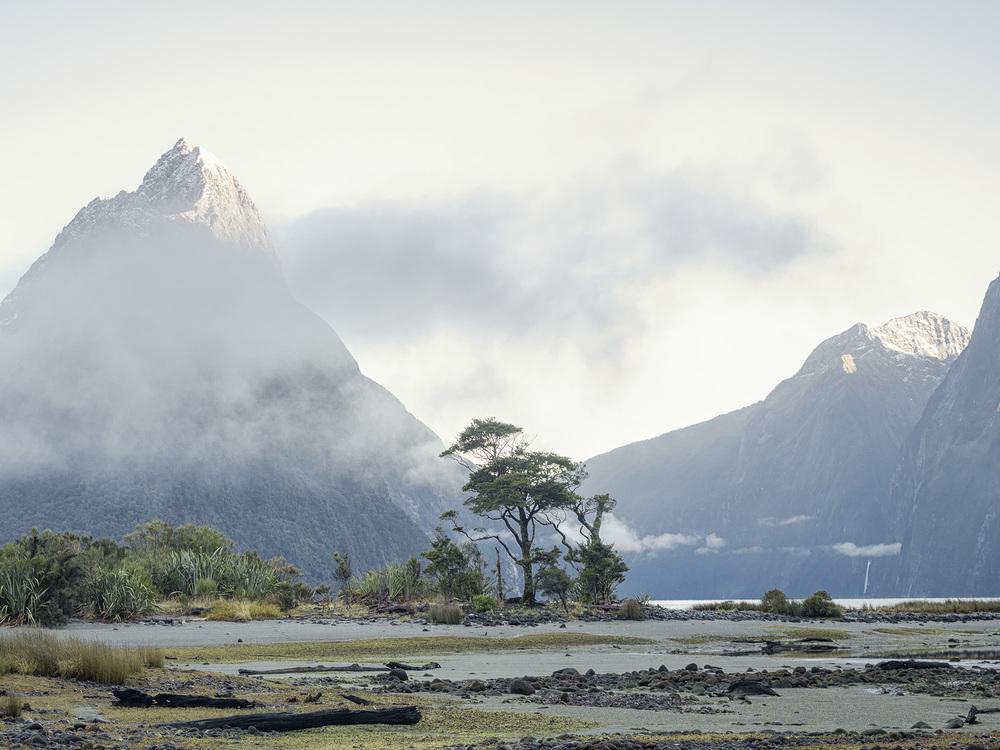 NZ_5190368.jpg