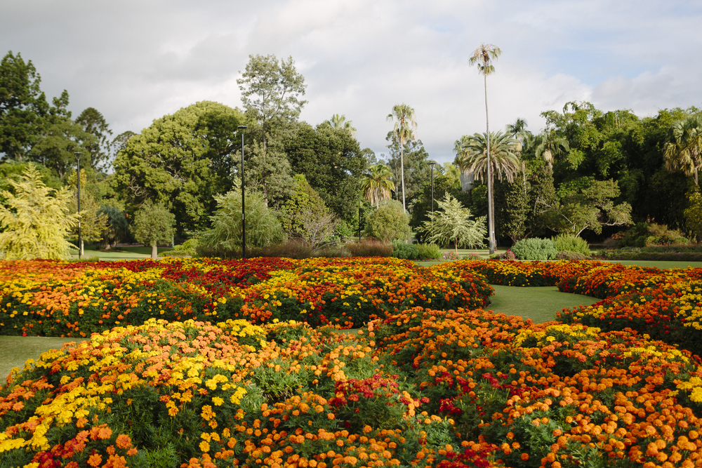 Brisbane_Botanic Gardens003.jpg