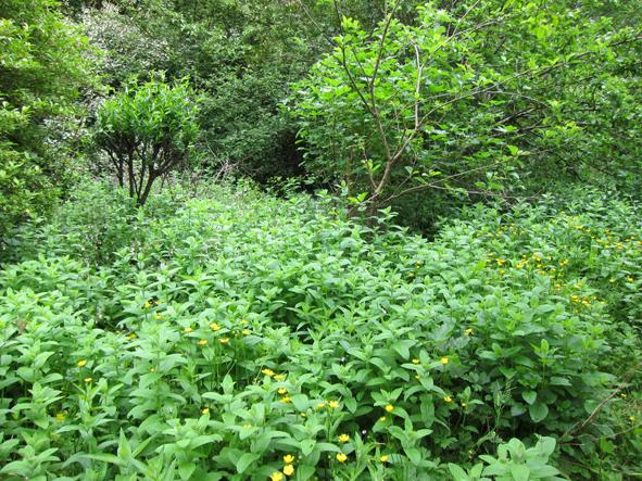 forest garden 2.jpg