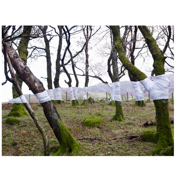 Zander Olsen - Tree Line Series