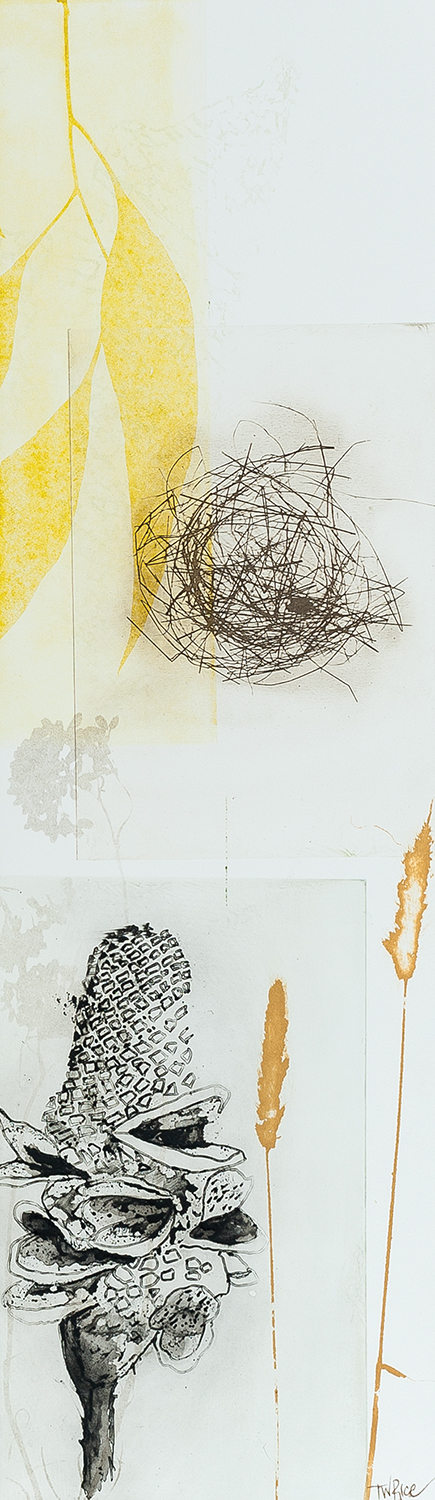 """Trudy Rice 'Yellow leaves next and banksia"""" Solar plate etching on paper 20x50cm 2014"""