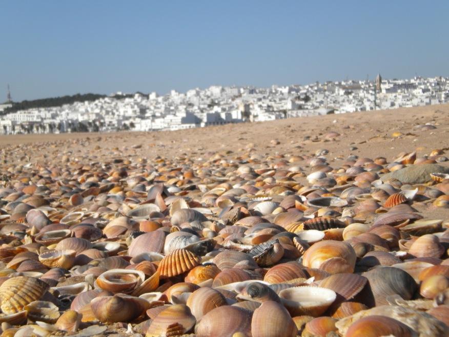 playa 1.jpeg