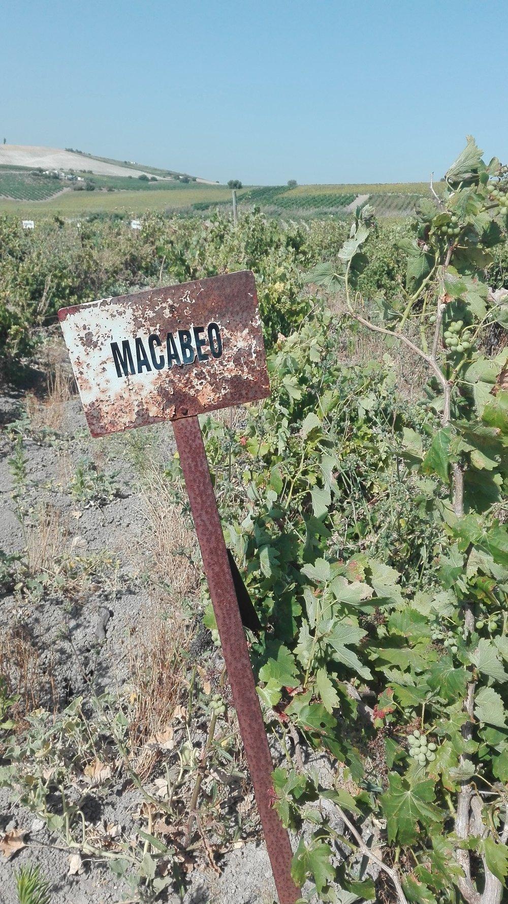 viñas  (2).jpg