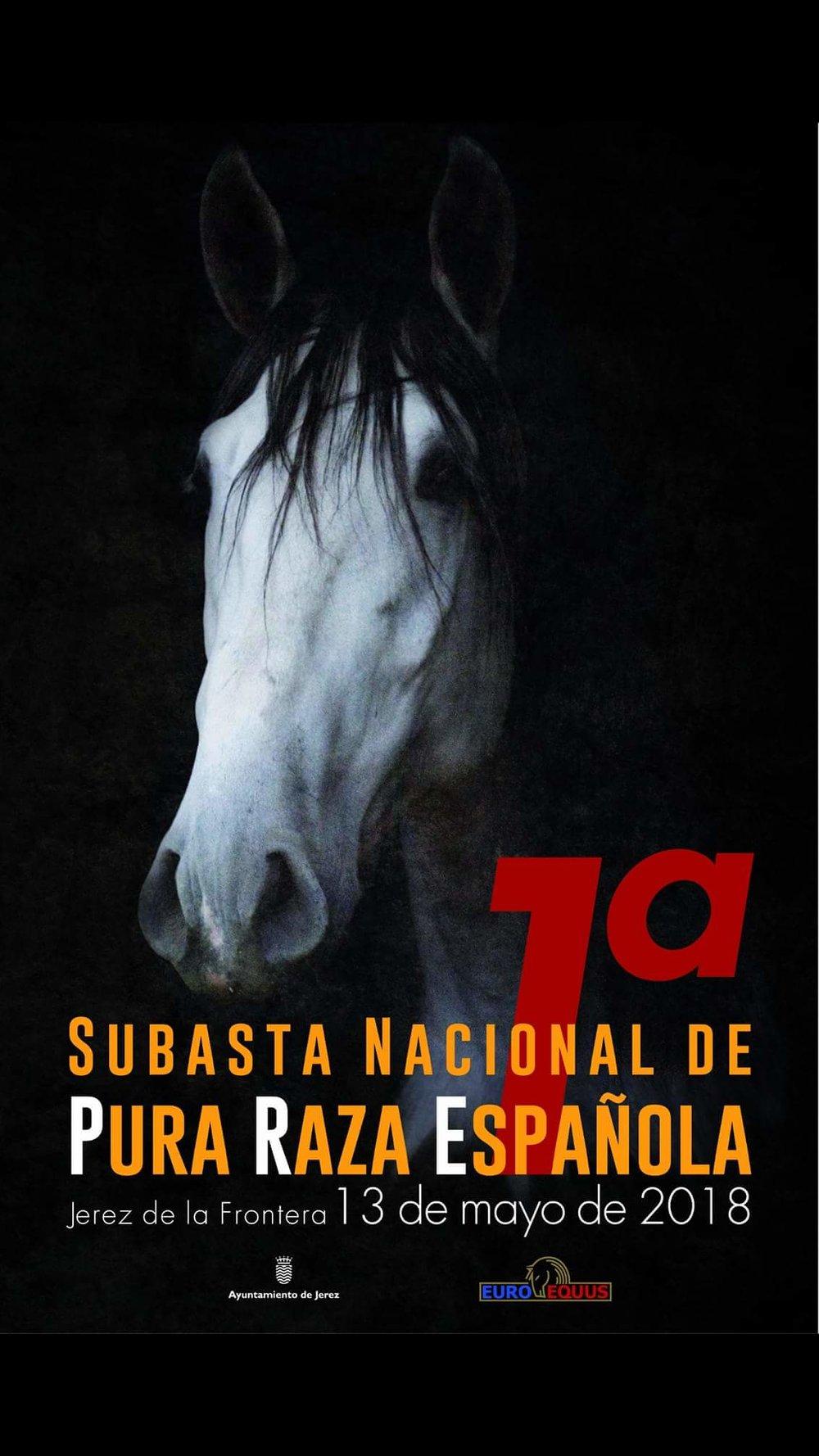 CABALLOS PURA RAZA.jpg