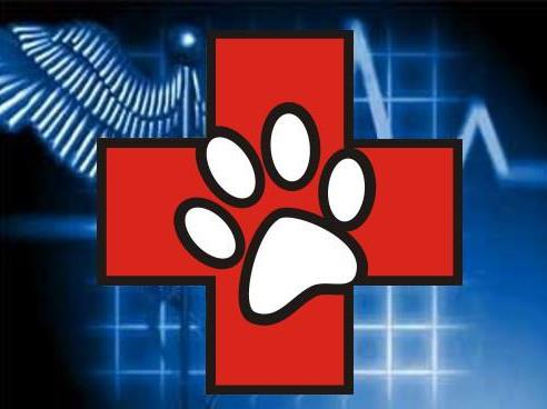 Pet Ambulance: Serving Southwestern Ontario