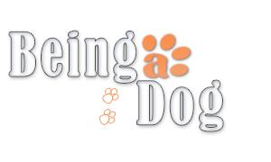 Dog Trainer-- Ontario