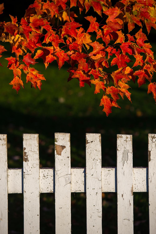 automne-2026.jpg