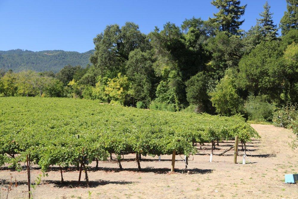 Gibbs-Napa-Valley-Cross-Creek-Vineyard-2.jpg
