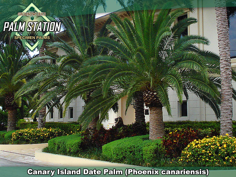 Miami Date Ideas