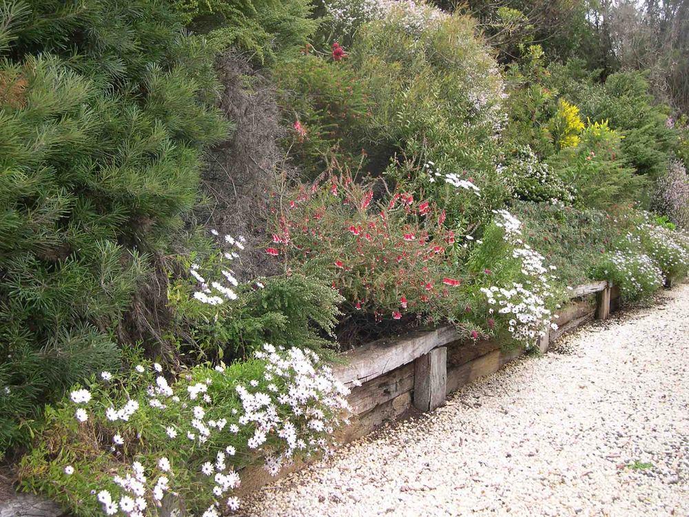 Grand Ridge - flowers in spring.jpg