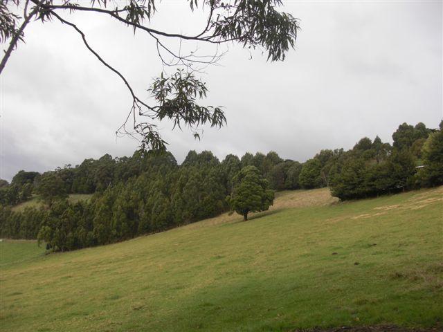 Grand Ridge 2012 12.JPG