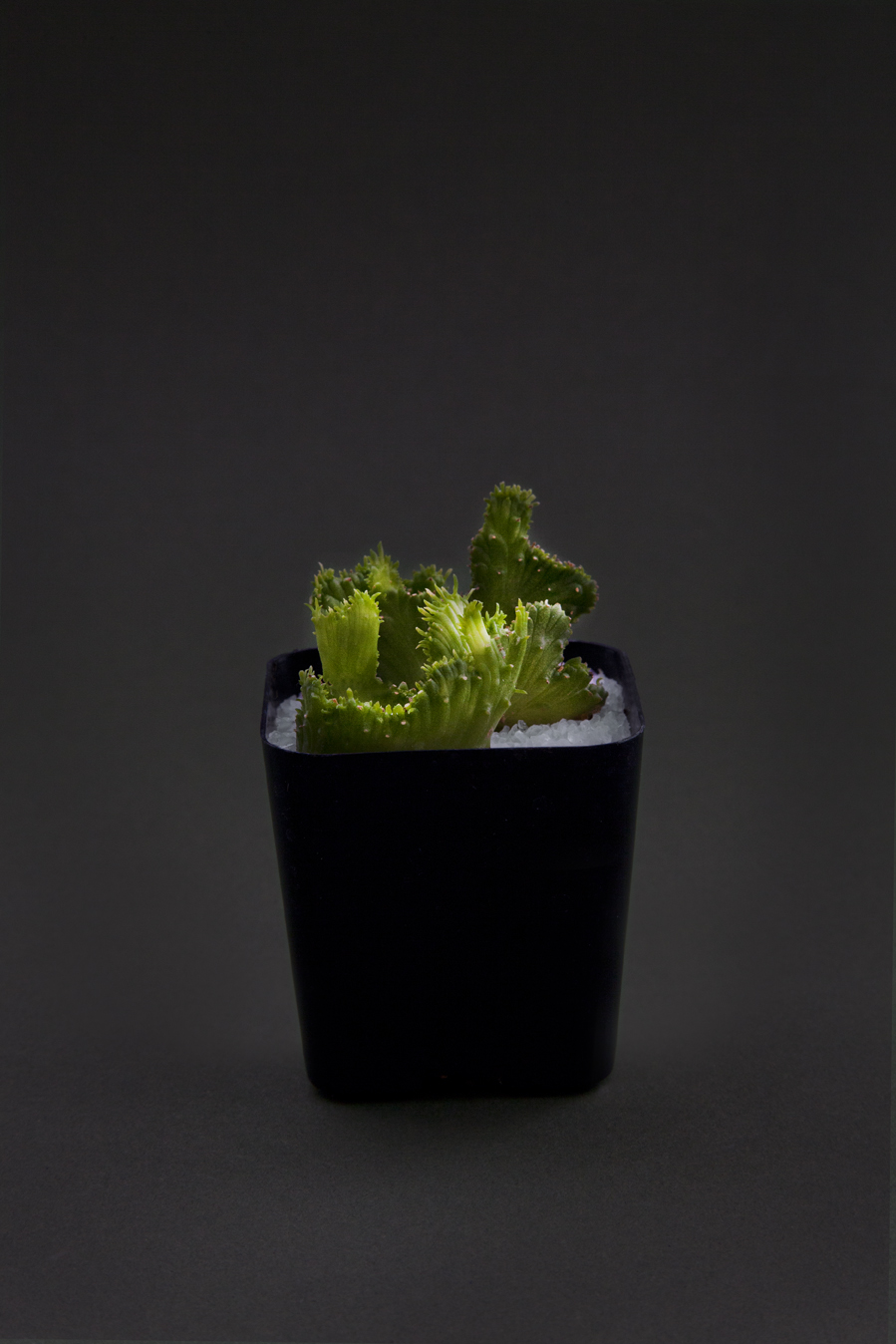 Becca_Ewing_succulent on black.jpg