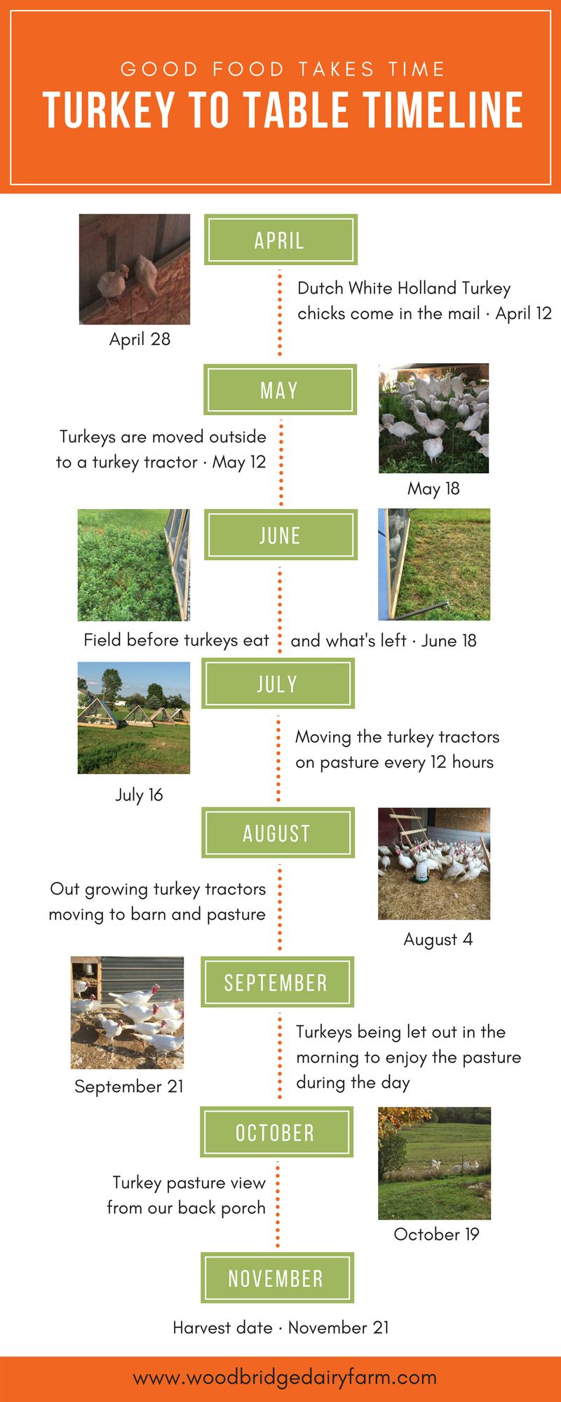 Turkey to Table Timeline.png