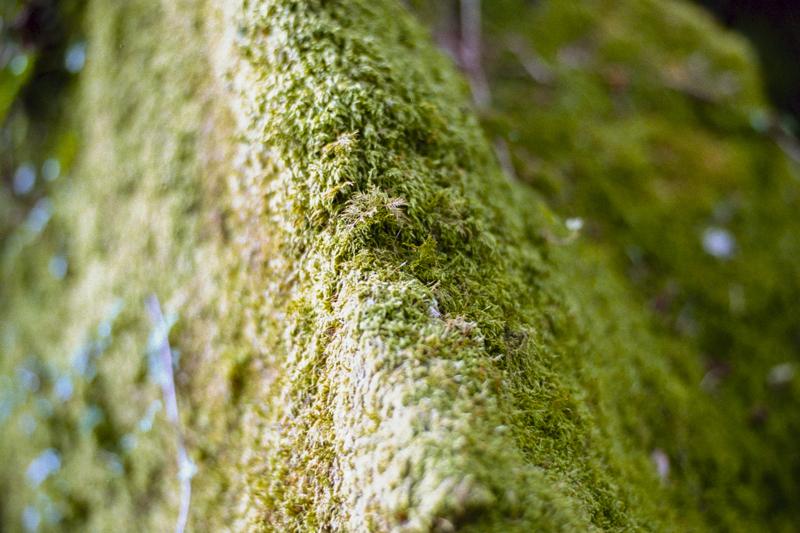 Dartmoor 2014 K-Gold007.jpg