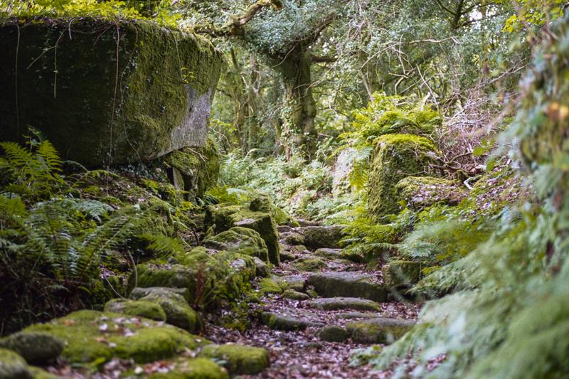 Dartmoor 2014 K-Gold008.jpg