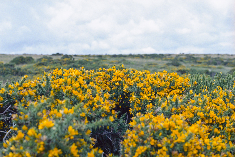 Dartmoor 2014 K-Gold013.jpg