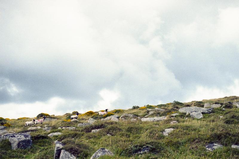Dartmoor 2014 K-Gold023.jpg
