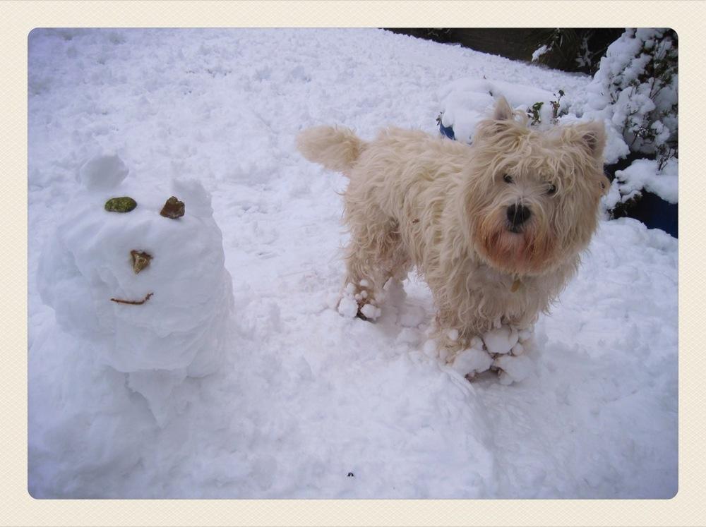 snowestie