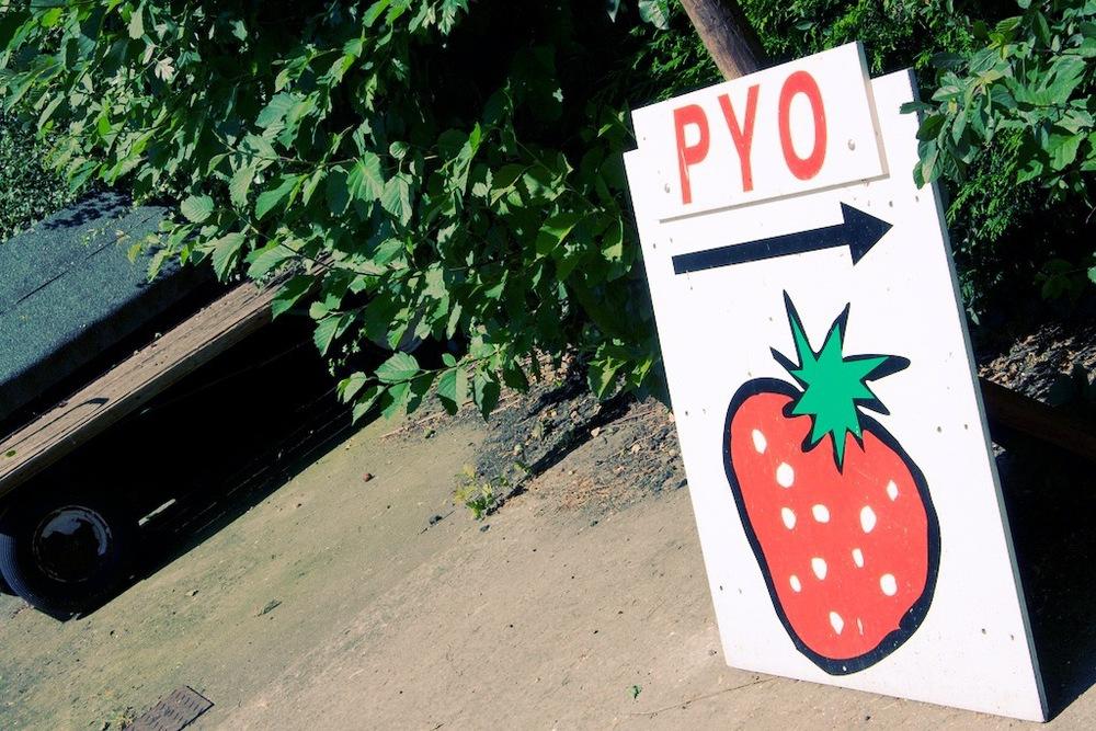 strawberryfields 21